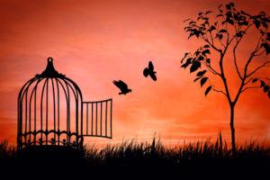 birds freed