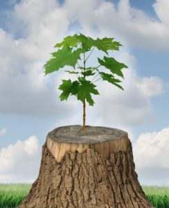20386499 - new development and renewal as a business concept of emerging leadership success with an old cut down tree and a new strong seedling growing from the center trunk as a concept of support and building a future